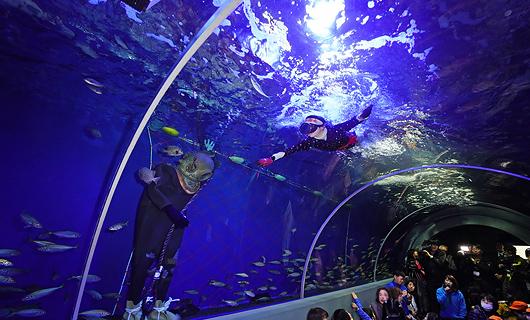 かめ吉と久慈の海の魚たち(トンネル水槽)
